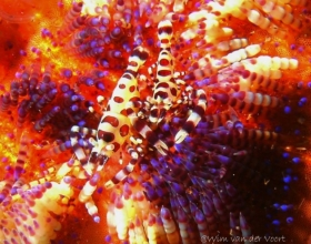 Critters Lembeh